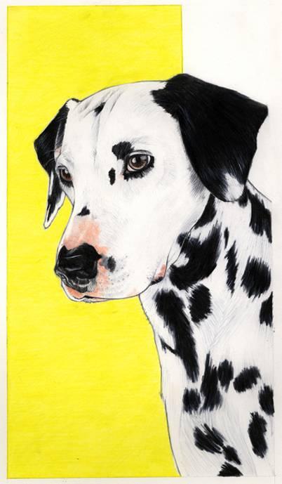 Pongo - Dalmatian